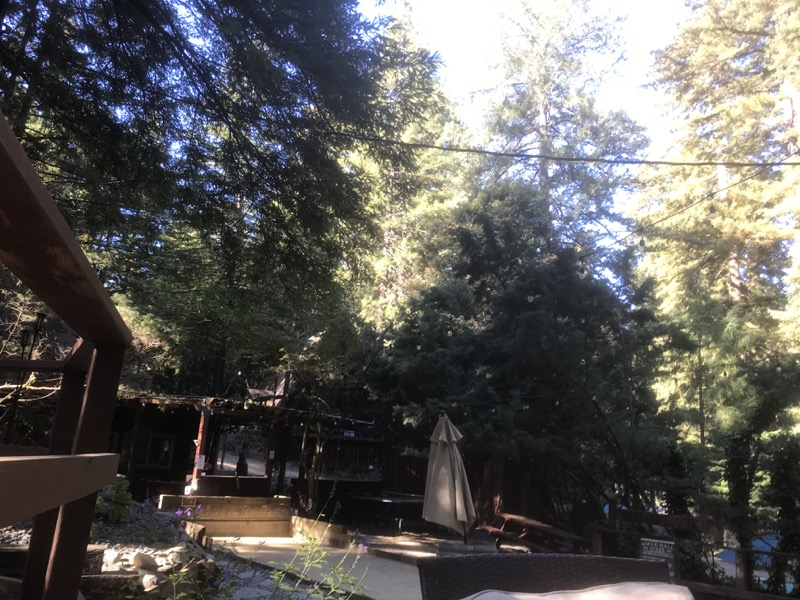 Family Fun in the Redwoods